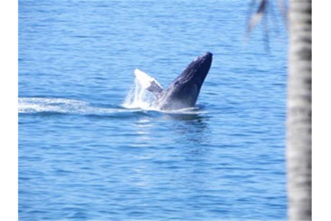 gay puerto vallarta and whale watching from conchas chinas beach