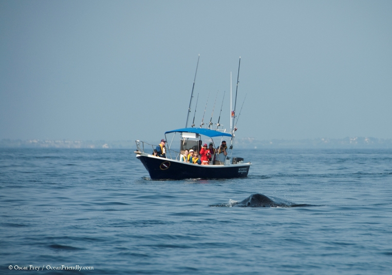 puerto vallarta nature tours and ecotourism - humpback whale
